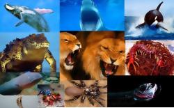 جانوران شکارچی و ویژگیهای متفاوتی که به آنها در شکار کردن طعمه کمک می کند - word